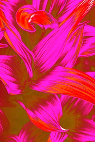 Miriam Stone, flower, Plants: Flowers, Nature: Miscellaneous, Contemporary Art
