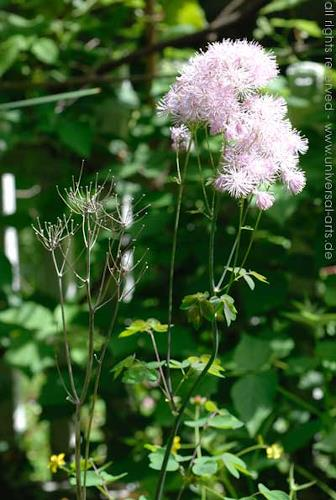 universal arts Jacqueline Ditt & Mario Strack, Two Generations, Plants: Flowers, Still life, Naturalism