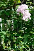 universal-arts-Jacqueline-Ditt---Mario-Strack-Plants-Flowers-Still-life
