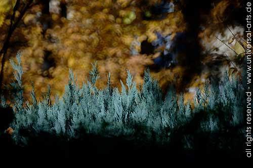 universal arts Jacqueline Ditt & Mario Strack, Photograph 1 von Mario Strack, Nature: Miscellaneous, Landscapes: Autumn, Naturalism