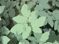 universal-arts-Jacqueline-Ditt---Mario-Strack-Nature-Earth-Nature-Miscellaneous