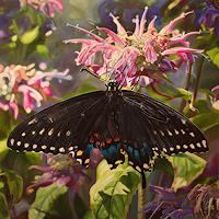 Jennifer-Walton-Plants-Flowers-Animals-Air-Contemporary-Art-Contemporary-Art
