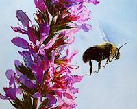 Jennifer-Walton-Animals-Air-Plants-Flowers-Contemporary-Art-Contemporary-Art