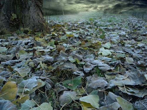 Lino Budano, Foglie, Nature: Earth, Landscapes: Winter, Expressionism