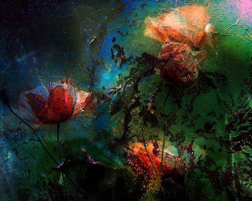 barbara banthau, verschlafener Mohn, Abstract art, Modern Age, Expressionism