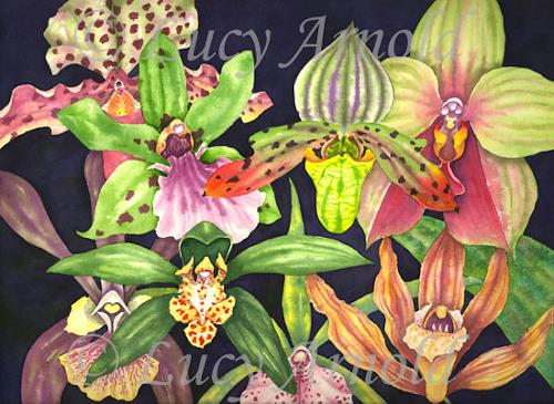 Lucy Arnold, Orchids, Plants: Flowers, Nature: Earth, Realism