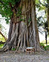 Agnes-Abplanalp-Plants-Trees-Nature-Miscellaneous-Contemporary-Art-Contemporary-Art