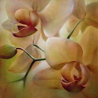 A. Schmucker, Orchideen_