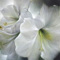 Annette-Schmucker-Plants-Flowers-Contemporary-Art-Contemporary-Art