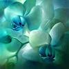 A. Schmucker, Orchideen, türkis-grün