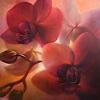 A. Schmucker, Orchideen, rotviolett