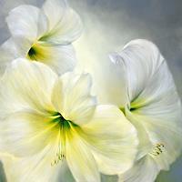 Annette-Schmucker-Plants-Flowers-Landscapes-Contemporary-Art-Contemporary-Art
