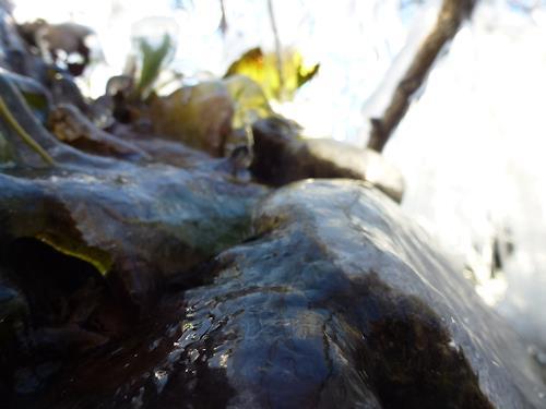 Renu G., November, Landscapes: Autumn, Emotions: Joy, Romanticism