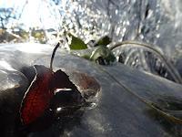 Renu-G-Landscapes-Autumn-Emotions-Joy