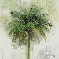Artur-Wasielewski-Plants-Palm-Landscapes-Tropics