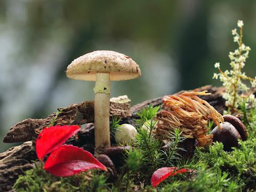 katarina niksic, Mushroom, Plants, Abstract Art