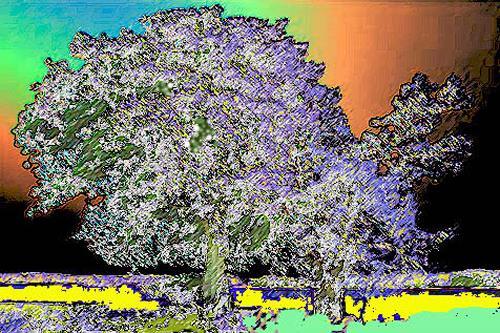 Günter Otto von Deyen, Prachtbaum, Landscapes: Plains, Neo-Expressionism, Expressionism