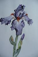 Anne-Waldvogel-Plants-Flowers-Decorative-Art-Modern-Age-Abstract-Art