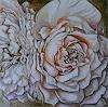 A. Waldvogel, Lions Rose