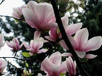 Symphonie-Landscapes-Spring-Nature-Earth