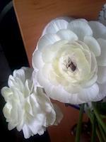 Symphonie-Plants-Flowers-Poetry