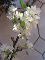 Symphonie-Plants-Trees-Landscapes-Spring