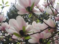 Symphonie-Landscapes-Spring-Decorative-Art