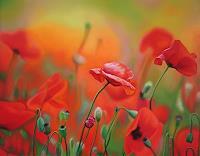 Ralf-Vieweg-1-Plants-Flowers-Modern-Age-Photo-Realism