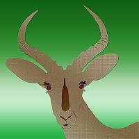 Liona-Toussaint-Animals-Land-Still-life