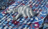 Neeharika Donau, Schlafende Katze