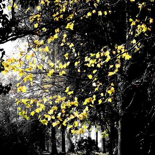 Sandra Robertz, Leaves, Miscellaneous Landscapes, Nature: Wood, Conceptual Art, Abstract Expressionism