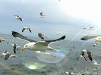 Sandra-Robertz-Landscapes-Sea-Ocean-Nature-Water-Modern-Age-Conceptual-Art