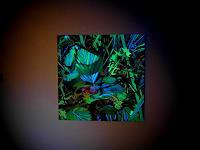 Albert-Lascaux-Nature-Miscellaneous-Miscellaneous-Plants