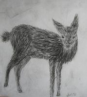 JoA-Animals-Land-Miscellaneous-Animals