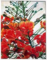 Renee-Koenig-Plants-Flowers-Contemporary-Art-Contemporary-Art