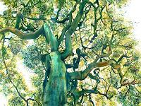 Renee-Koenig-Plants-Trees-Nature-Air-Contemporary-Art-Contemporary-Art
