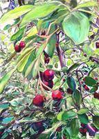 Renee-Koenig-Plants-Fruits-Meal-Modern-Times-Realism