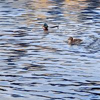 Daniel-Gerhard-Nature-Water-Animals-Water