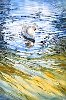 Daniel-Gerhard-Animals-Water-Nature-Water-Modern-Age-Abstract-Art