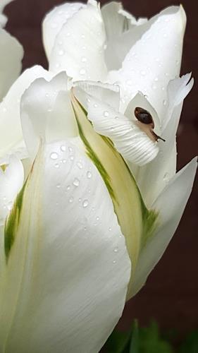 Sankofa, Melancholie der Langsamkeit, Plants: Flowers, Decorative Art, Photo-Realism