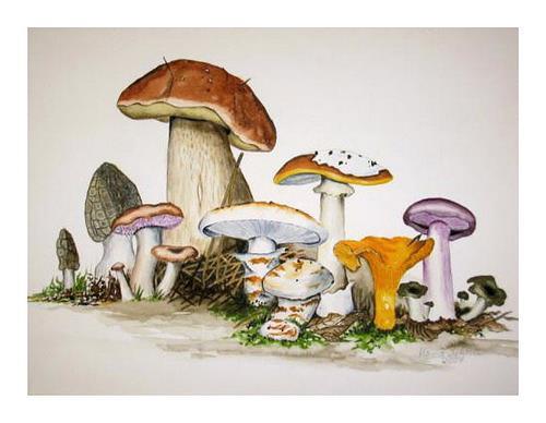 Maria Inhoven, Pilze- Früchte des Waldes, Miscellaneous Plants, Nature: Earth, Naturalism, Expressionism