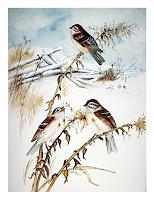 Maria-Inhoven-Animals-Air-Times-Winter-Modern-Age-Naturalism
