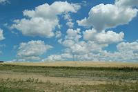 Katharina-Orlowska-Landscapes-Plains