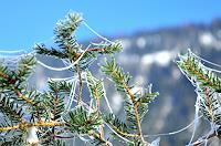 Katharina-Orlowska-Plants-Trees-Landscapes
