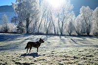 Katharina-Orlowska-Animals-Land-Times-Winter
