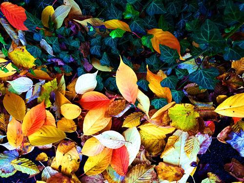 Brigitte Raz-Goldau, Herbstblätter im Oktober 1 - 3 Nr.1, Plants, Landscapes: Autumn, Realism