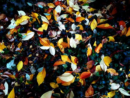 Brigitte Raz-Goldau, Herbstblätter im Oktober 1 - 3 Nr.2, Landscapes: Autumn, Plants, Realism
