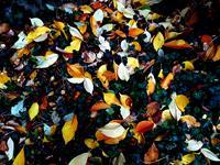 Brigitte-Raz-Goldau-Landscapes-Autumn-Plants-Modern-Times-Realism