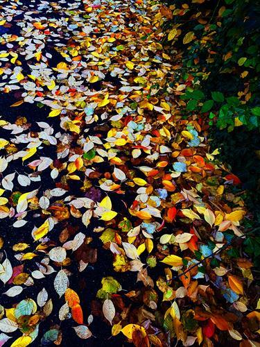 Brigitte Raz-Goldau, Herbstblätter im Oktober 1 - 3 Nr.3, Plants, Nature, Realism, Expressionism