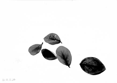Brigitte Raz-Goldau, Fünf Herbstblätter 1-3    Nr. 2, Plants, Nature, Contemporary Art